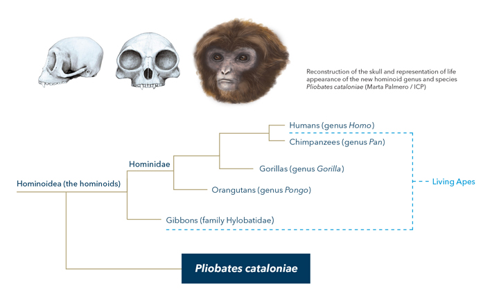 Pliobates cataloniae roamed the Earth 11.6 million years ago