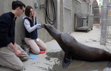 A student of Dr. Leftwich observes a sea lion at the Smithsonian's National Zoo