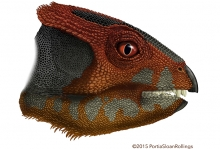 Researchers have described a new species of plant-eating dinosaur, Hualianceratops wucaiwanensis, that stood on its hind feet an